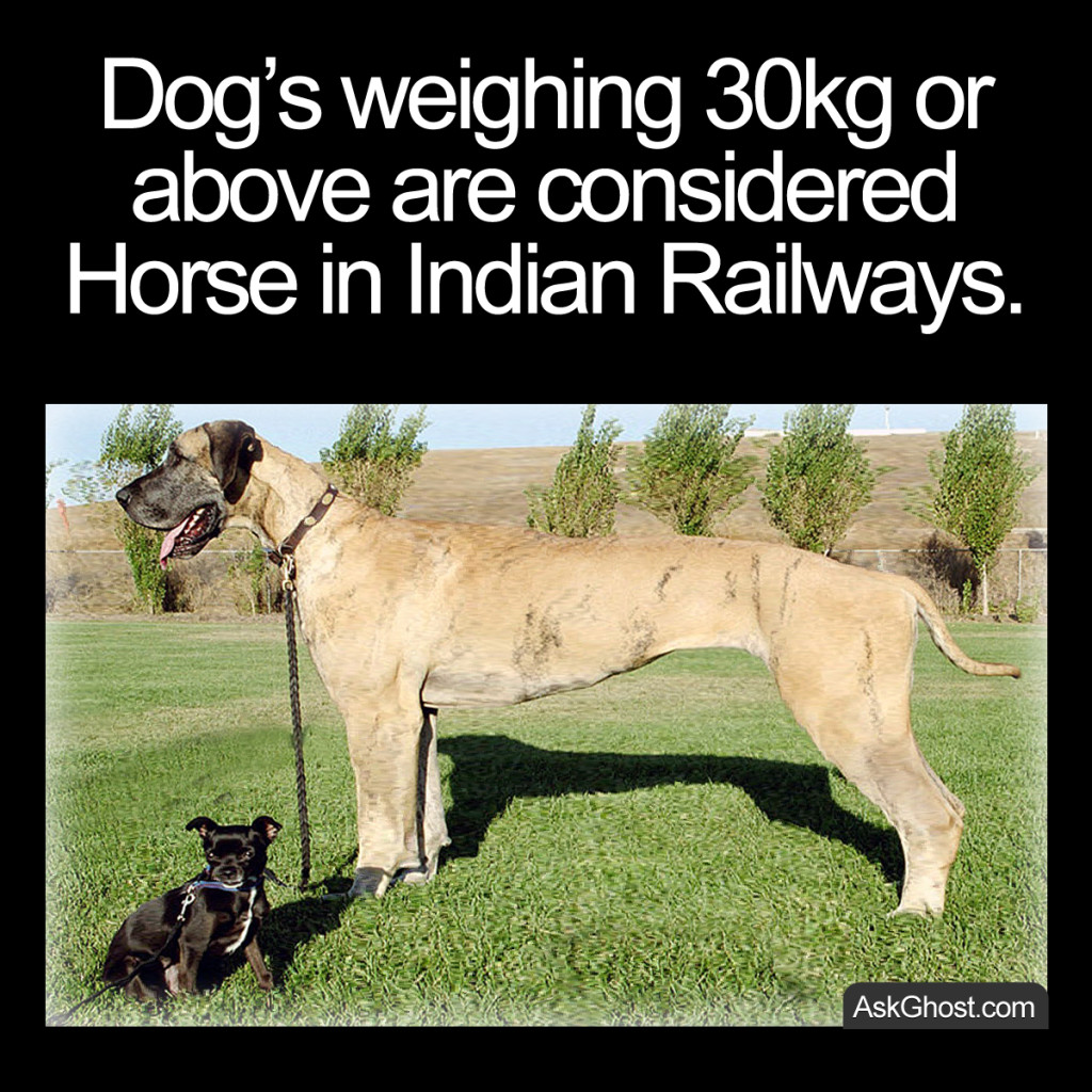 Dog's weighing 30kg or above are considered Horse in Indian Railways
