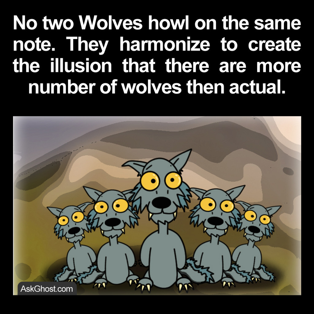 fact-about-pack-of-wild-wolves
