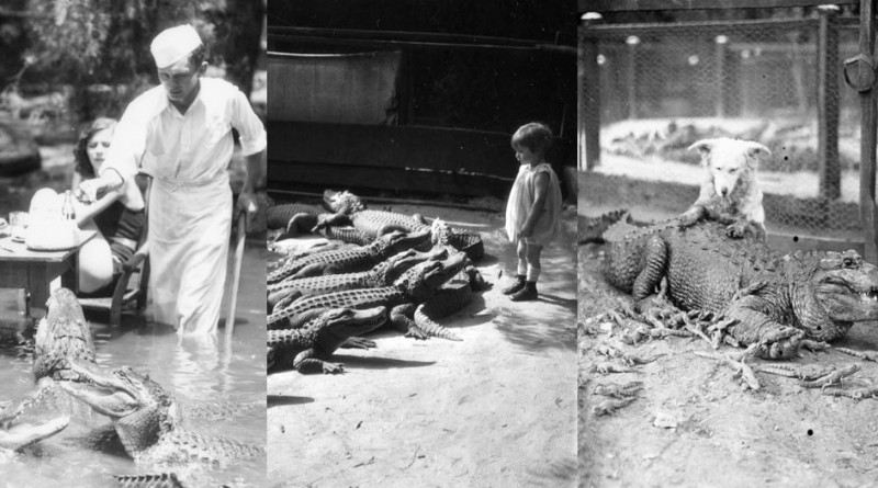The California Alligator Park, where Children Use To Cuddle Alligators thumbnail