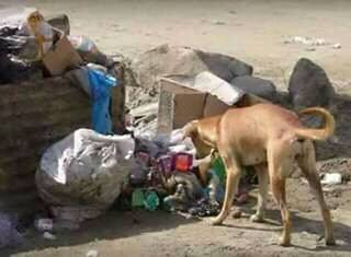 Indian-Stray-dog-rescuing-a-new-born-girl-child-from-street-dustbin-02