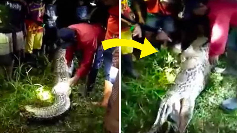 SHOCKING-VIDEO-Human-Eating-Snake-Indonesia-image-01-askghost.jpg