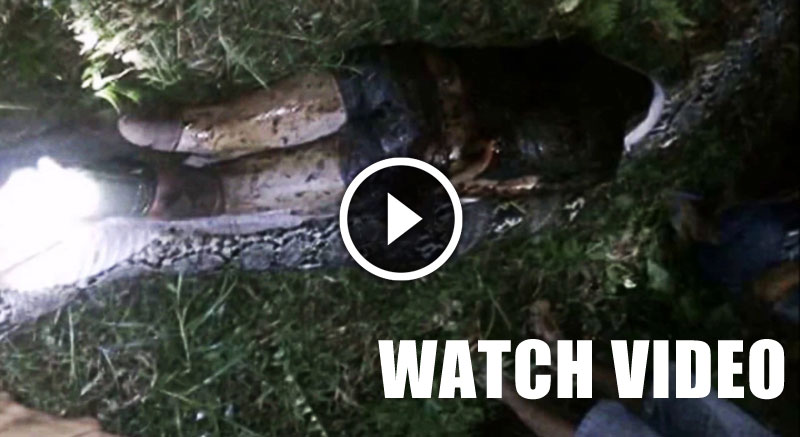 SHOCKING-VIDEO-Human-Eating-Snake-Indonesia-thumbnail-askghost.jpg