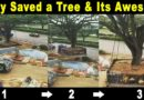 How IS This Even Possible, Giant TREE Relocated In India
