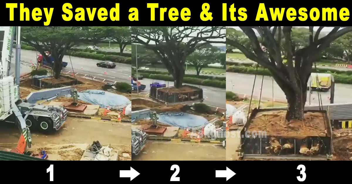 how-is-this-even-possible-giant-tree-relocated-in-india-thumbnail.jpg